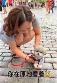 """狗狗原地等主人,没想到演变成了""""街头卖艺""""……"""