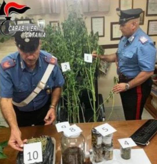 厨师涉大麻毒品交易被捕,称是在研究烹饪新口味