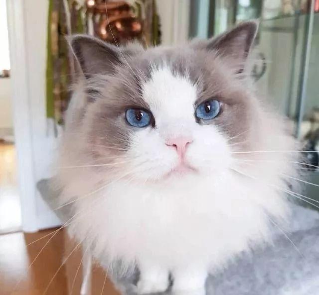 猫埋便便的一些个原因分析