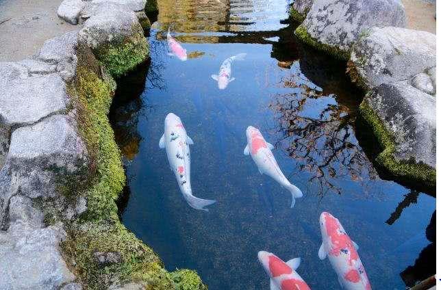 """俗话常说""""水至清则无鱼""""下半句你知道是什么吗?下半句才是精髓"""