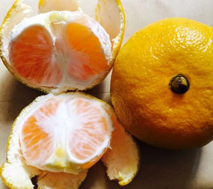 """吃货有的几个""""癖好"""",吃橘子都要去白络,看完感觉有人在偷窥!"""