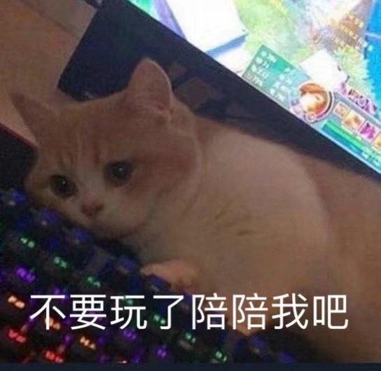 喵喵專輯 貓貓能有什么壞心眼呢?