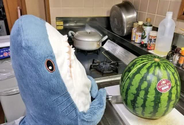 日本网友请了一群小鲨雕吃西瓜,看着好可爱