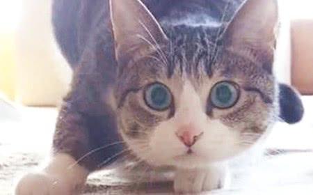 铲屎官为了让猫咪多喝水,绞尽脑汁地行动,反而危害到猫咪
