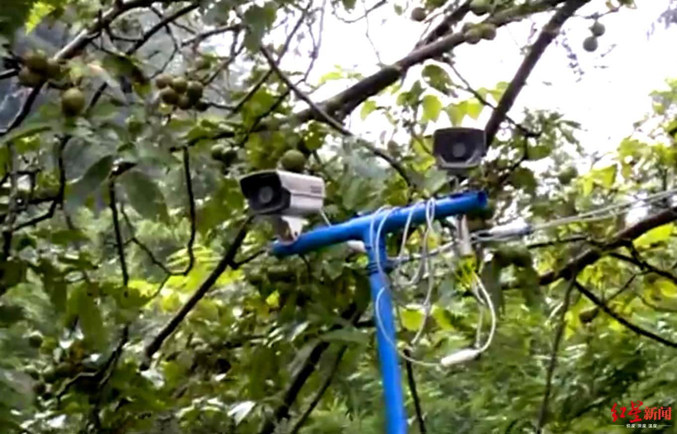 好狂!装8个摄像头难防贼,窃贼往返偷3次连半桶油都不放过