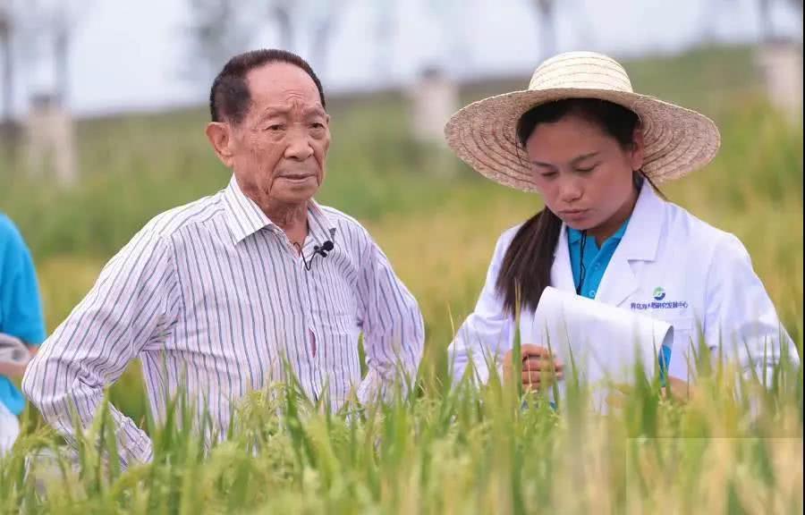 袁隆平在菲律宾,面对国外制种专家,他讲出一个独创的制种绝招
