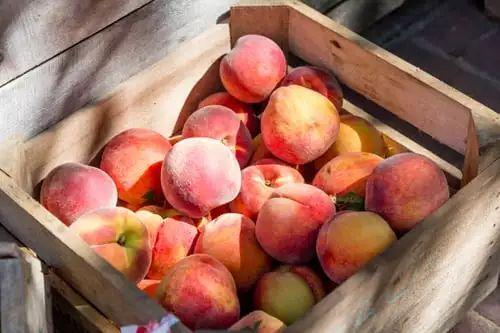 桃子和蜂蜜可以一起吃吗?桃子和蜂蜜相克吗?