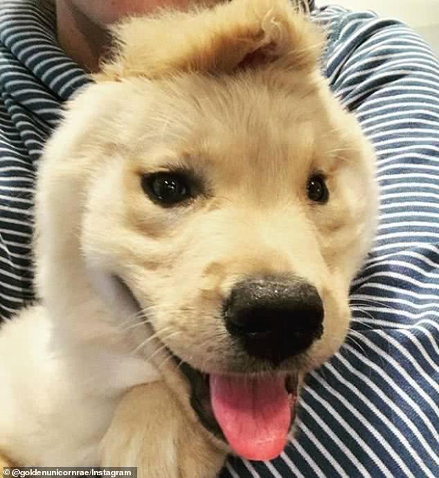 美国可怜小狗出生仅一只耳,位置还不对,如今蹿红走上狗生巅峰