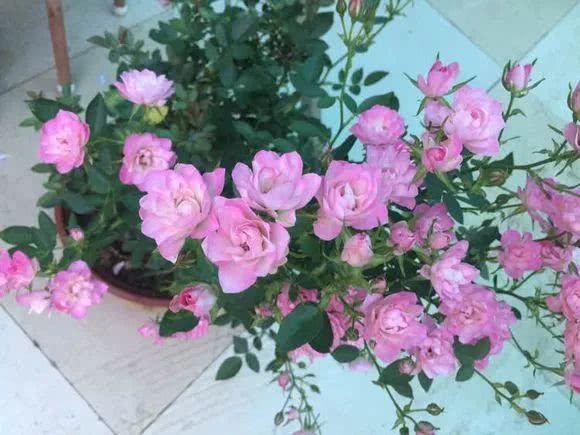 """阳台养盆这个""""花"""",多晒太阳,浇浇水,一年到头都开花,值得养"""