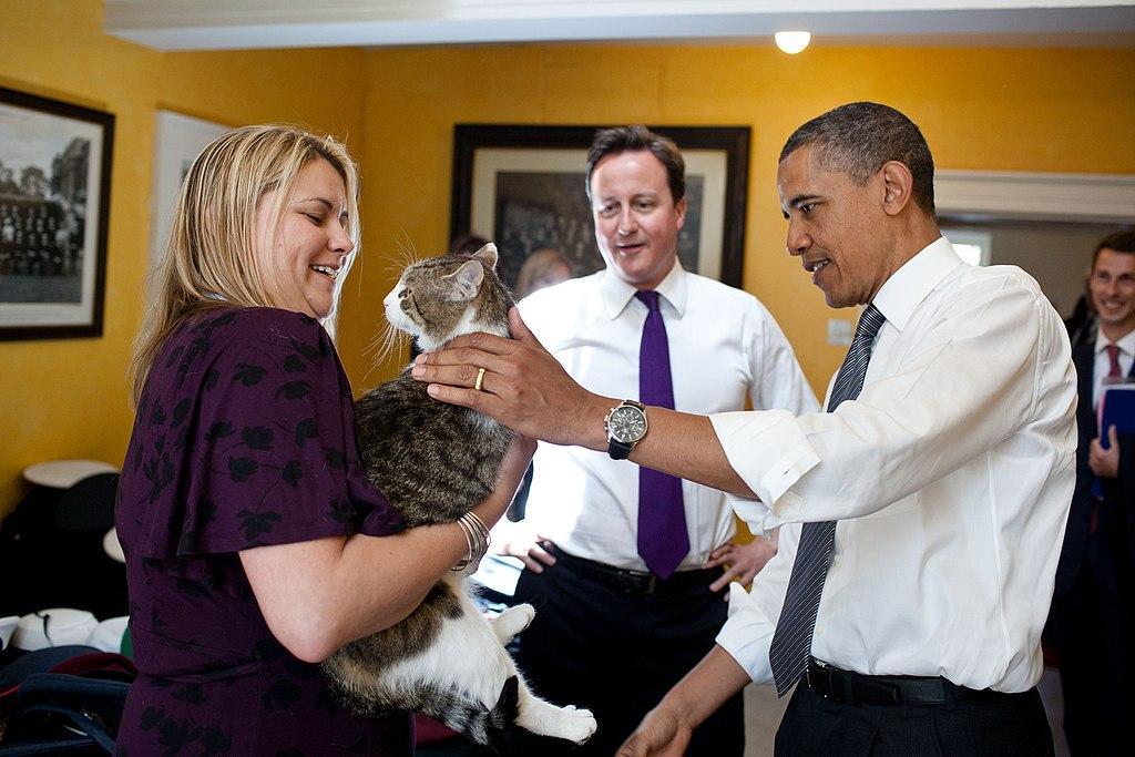 英国换新首相,那唐宁街的公务猫拉里怎么办?