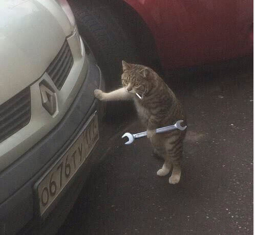 """惊现一只""""汽车维修猫咪"""",动作熟练,猫咪:修好可得"""