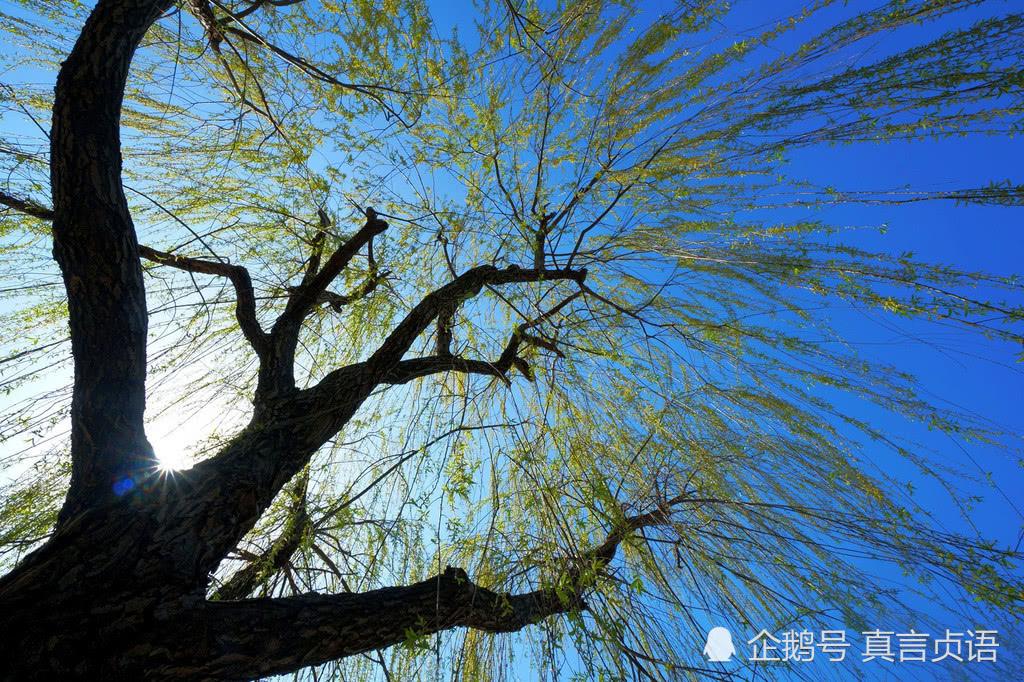 张美林原创诗歌三首:忆童年