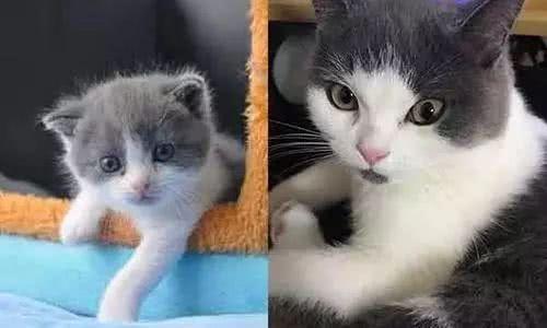"""中国首只自主培育克隆猫""""大蒜""""诞生,25万一只,到底有多像?"""