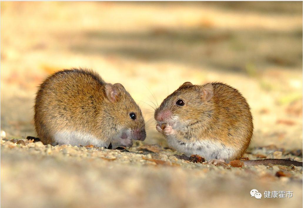 一种特定的鼠疫耶尔森菌抗原可通过不同技术进行检测.图片