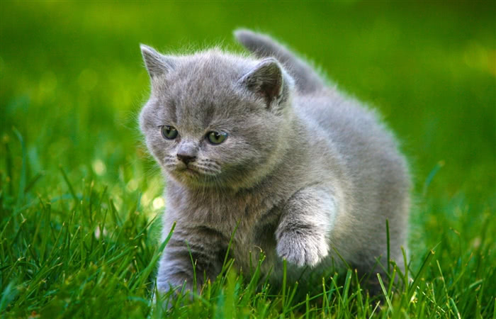 已经有一只猫,养第二只猫需要注意什么?
