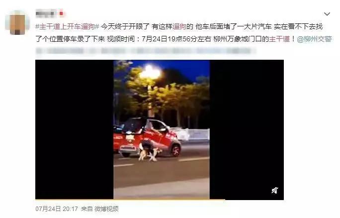 什么操作?柳州一女子开宝骏马路上遛狗,被群众举报!结果凉凉
