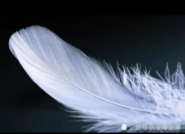 测试:4片羽毛中选一片最柔顺的,测你前世是什么身份,我是女侠