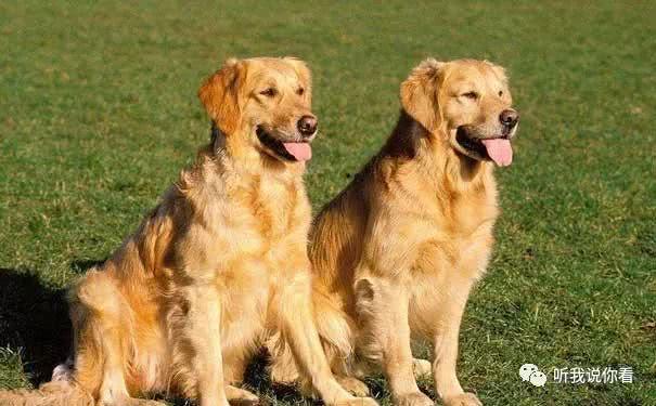 <b>宠物专家:领养狗狗卡斯罗犬的护理常识</b>