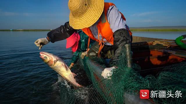 乌伦古湖开湖:首日捕鱼六吨,渔民大赞丰收