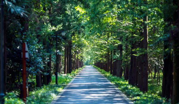 夏天的林荫路
