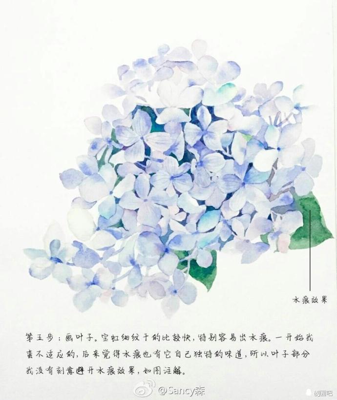 手绘教程——清新淡雅的绣球花详细教程~丨@sancy森