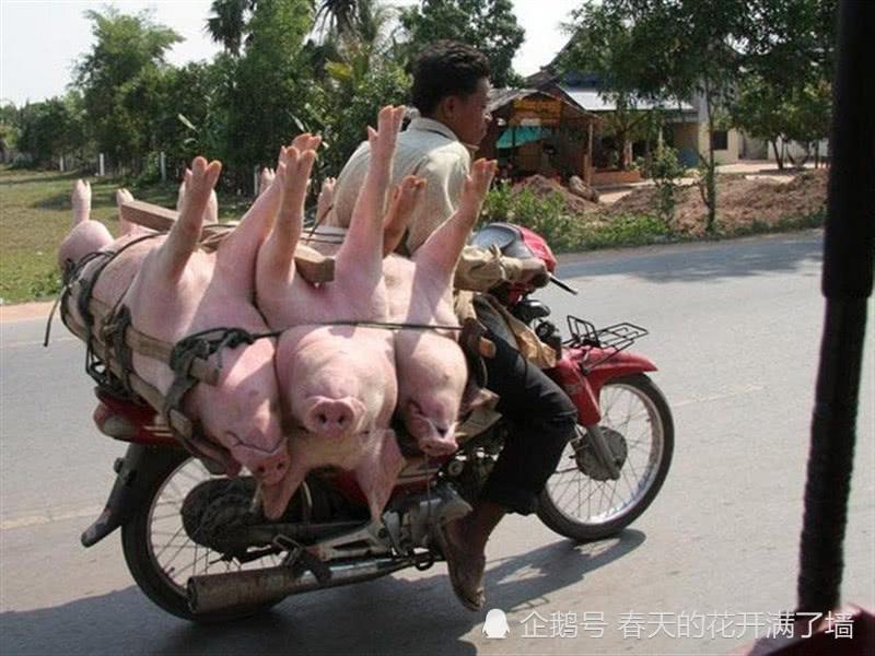 <b>农村满街跑的摩托车,为何现在越来越少见?村里人:白送也不要!</b>