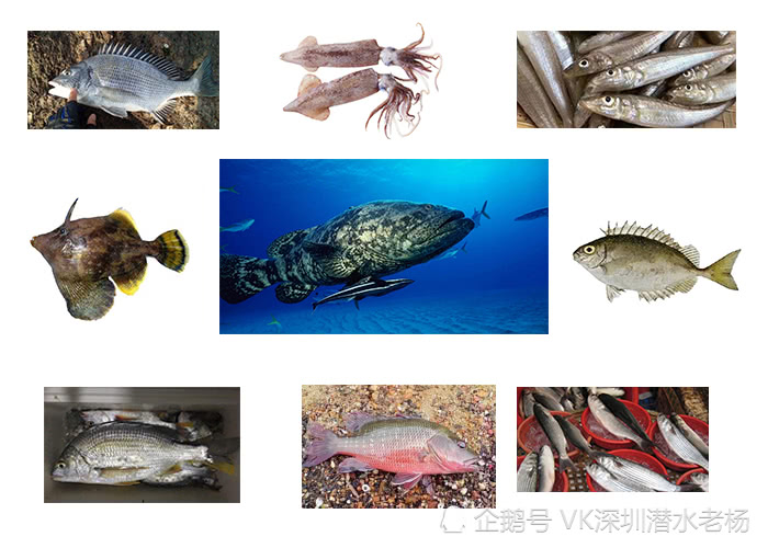 海钓不到鱼?9种国内易钓海鱼分布