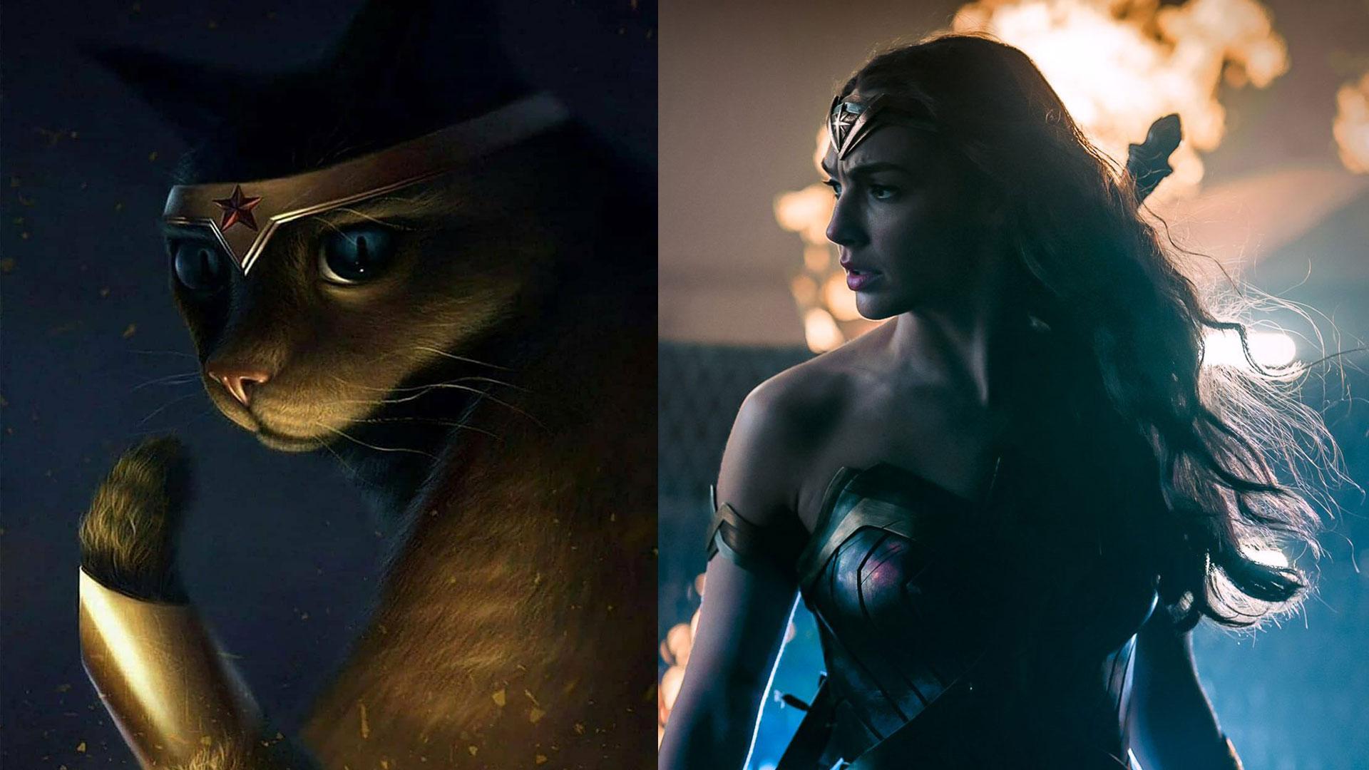 """正义联盟 """"猫化"""":超人变""""飞天猫"""",你看闪电侠可爱成啥样?"""