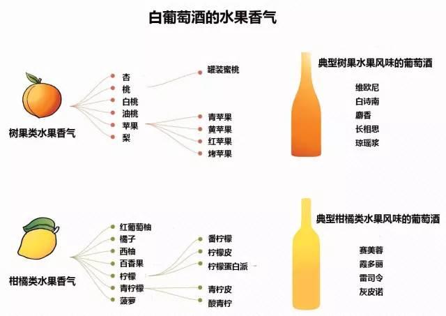 入门:如何识别葡萄酒的香气? - 红酒百科全书 - 红酒百科全书