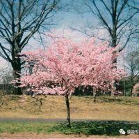 心理测试:选一棵下面的桃花树,测哪一个人