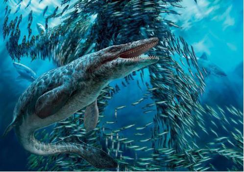 大白鲨并非最凶猛生物,它一进入大白鲨的领地,大白鲨就得逃跑