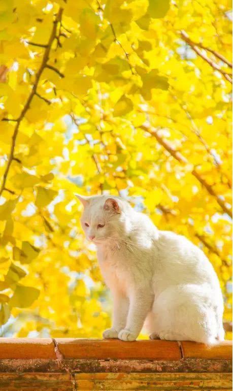 在最美的诗词里,遇见最美的秋天!