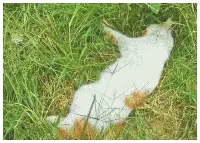 在宿舍养猫会很欢乐吗?事实告诉你,不负责任会出大乱子!