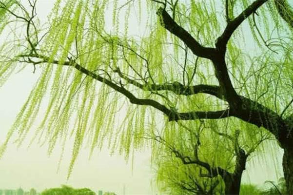 """苏轼被一贬再贬,写出一首词""""压倒古今"""",最后一句催人泪下"""