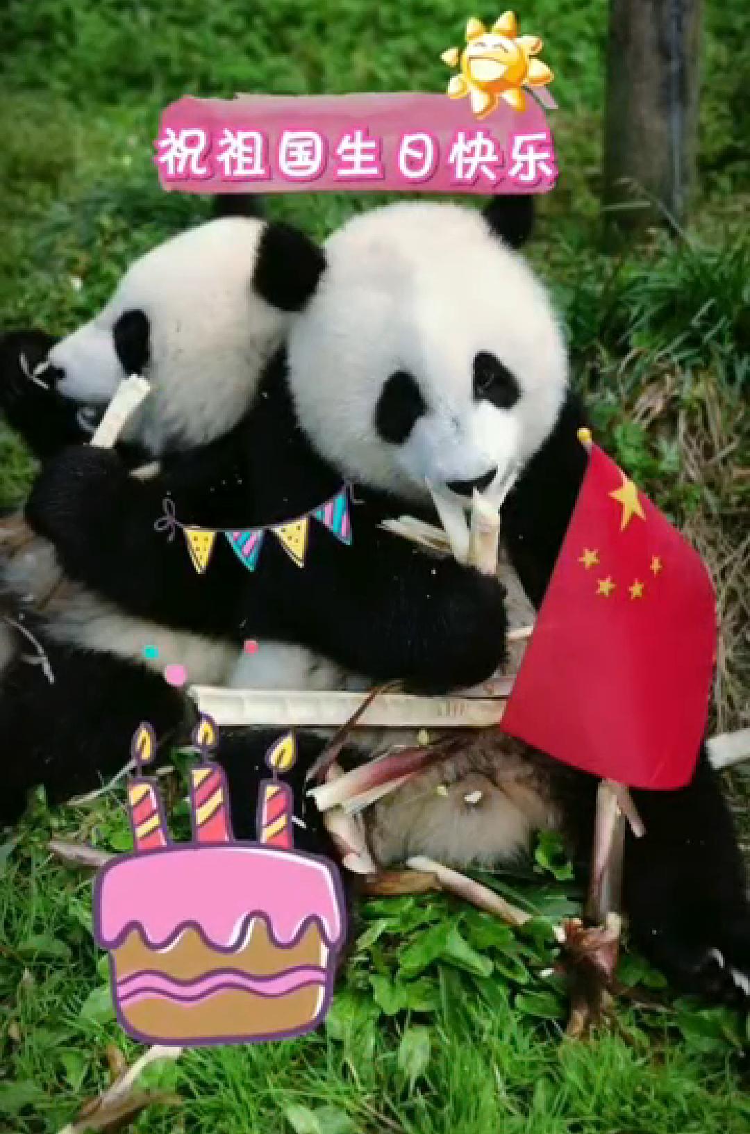 国庆看大熊猫,带上OPPOReno2记录精彩全程