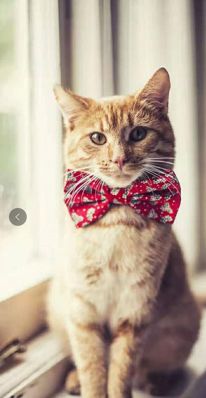 你想养只猫吗?猫咪所需要的物品,清单一份请查收