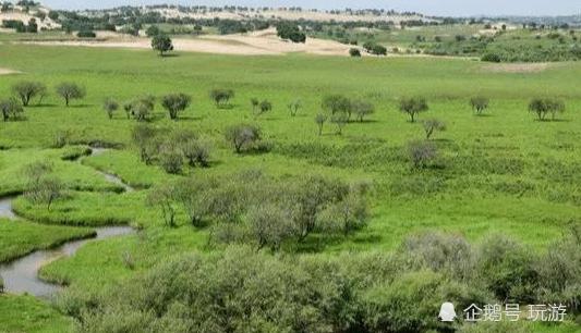 """国内唯一要被绿化的沙漠,却来了一群""""蛀虫"""",治沙人:心血没了"""