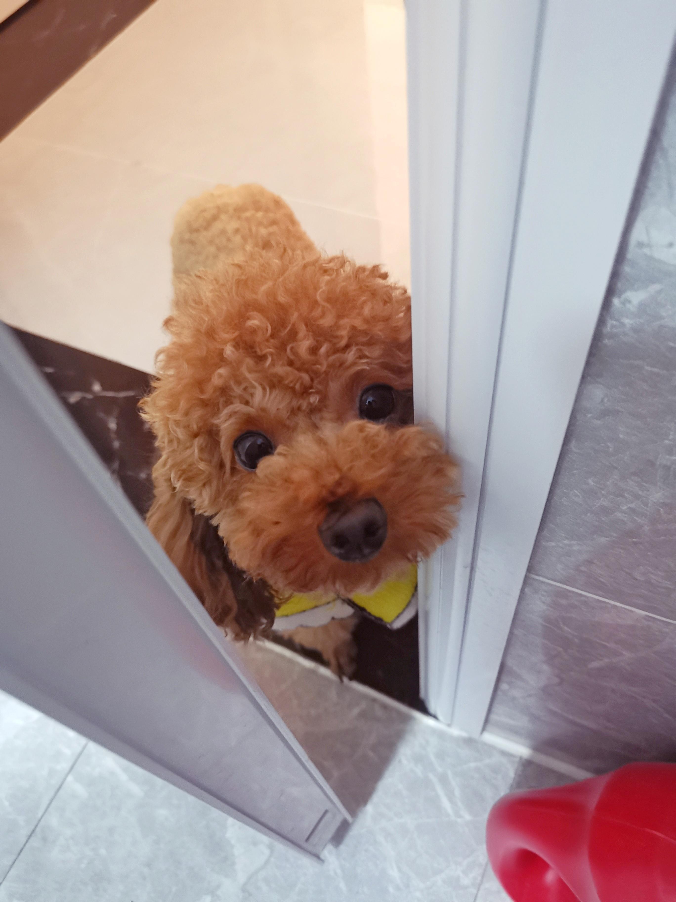 为什么主人上厕所的时候狗狗都要跟着?原因感人!