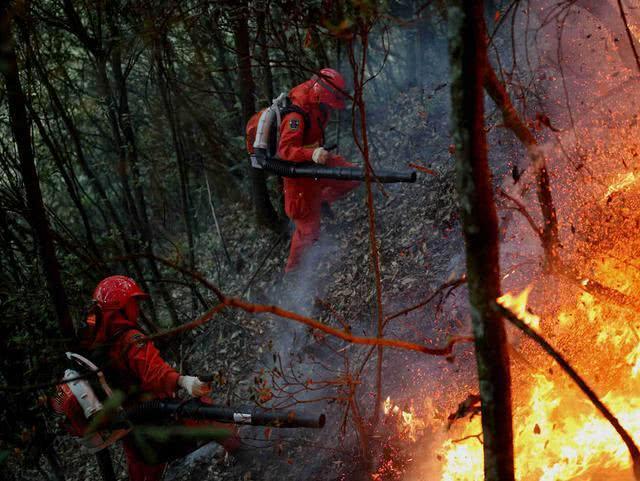 210天!澳洲森林火灾终于熄灭了!小动物们可安好?