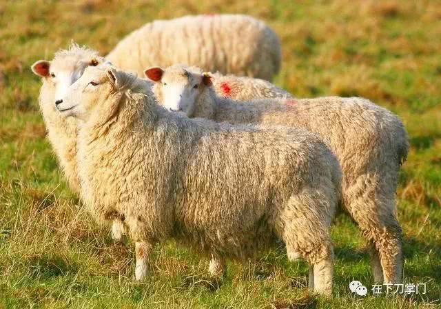 宋真宗时期,皇宫一天吃350只羊,苏东坡被贬没钱后才研究东坡肉