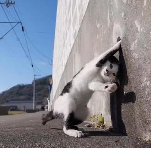 """当猫咪们会""""功夫""""了,主人:""""世界和平""""看来就要靠你们了"""