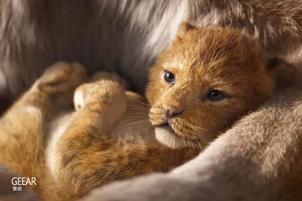 《狮子王》中真实版小狮子辛巴的本尊曝光,萌翻一众网友!