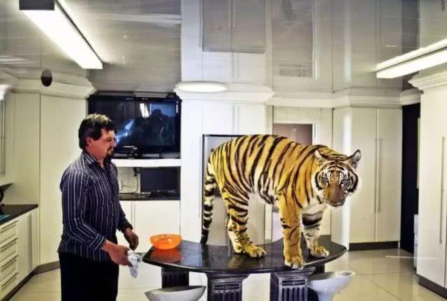 "<b>土豪在家里养了3只老虎,上演了真实版""美女与野兽""</b>"