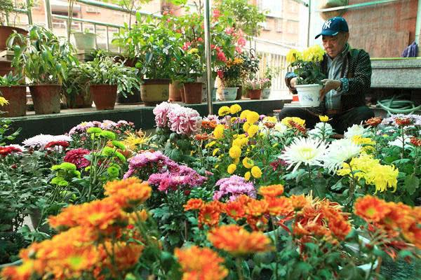 养花有技巧!选不对花盆,就算你是养花大师也是养一盆死一盆!
