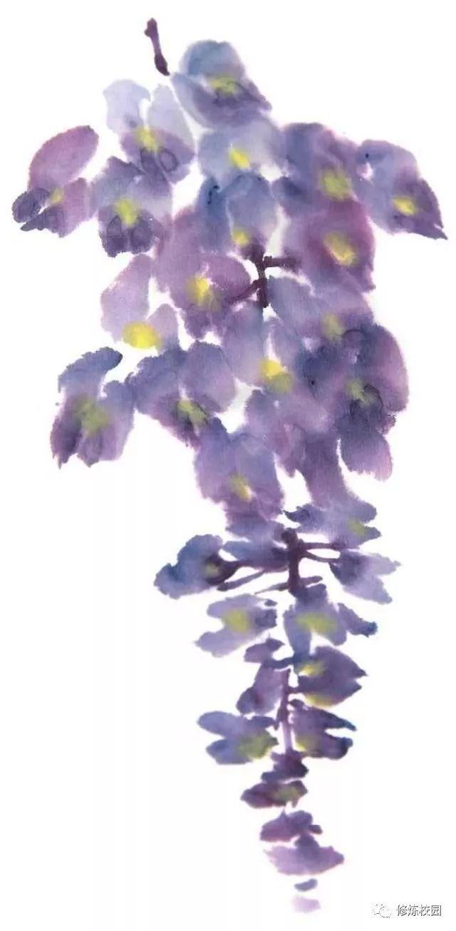 紫藤花花冠呈紫色,圆形.