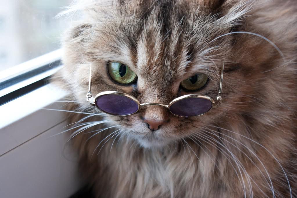 <b>猫的视力真的好么?大眼睛背后的高度近视</b>