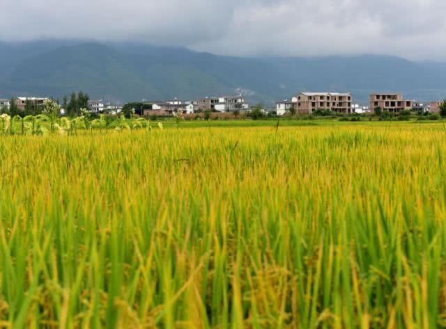 """稻作源于印度?美国""""仙人洞""""考古后,大呼:中国种了1.2万年"""