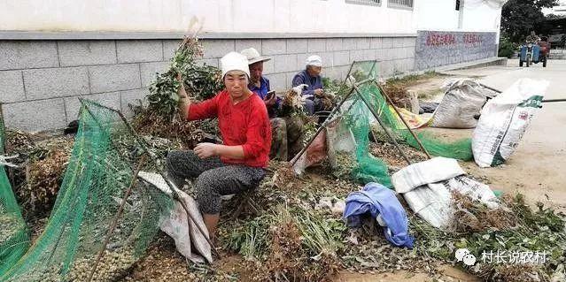 几根钢筋一张网,农民自制摘花生神器效率惊人,86岁老人轻松上手