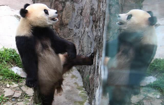 日本模型展出现熊猫,网友吐槽:看吧我就说是人假扮的