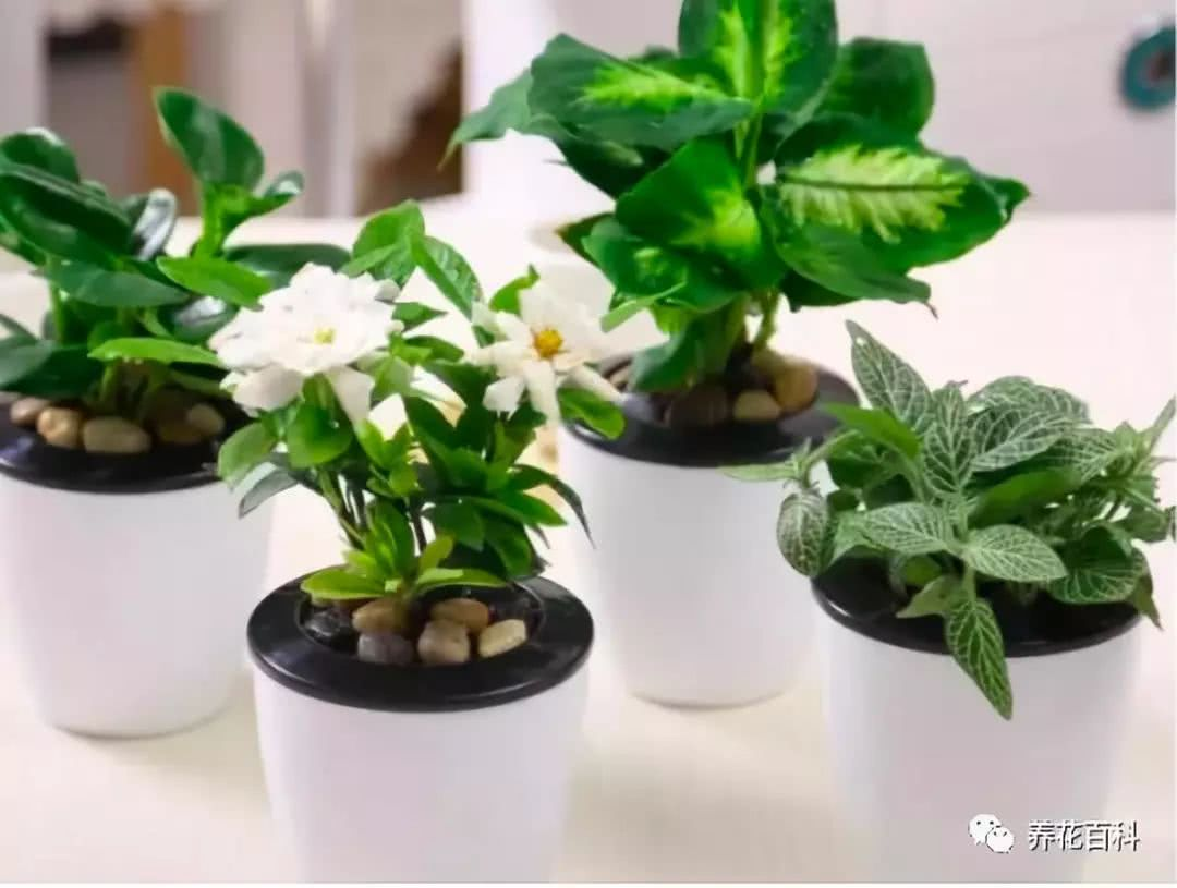 秋季养花只要做到这8点,明年盆栽开爆盆!